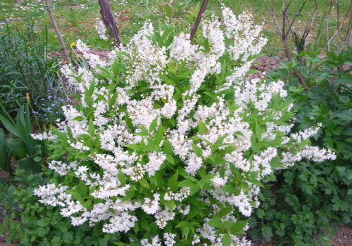 flower-plant-lilac-shrub-subshrub-1424475-pxhere.com